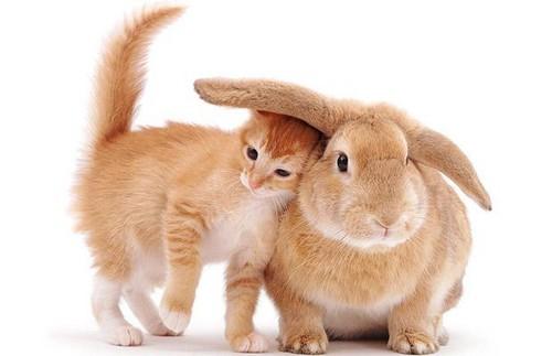 http://www.mechelenblogt.be/bestand/afbeelding/jangoovaerts/cute,rabbit-94a6479a151629cfd3a4db9bd0ca211a_h.jpg